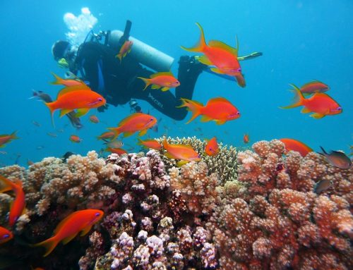 The complete guide to Koh Samui diving
