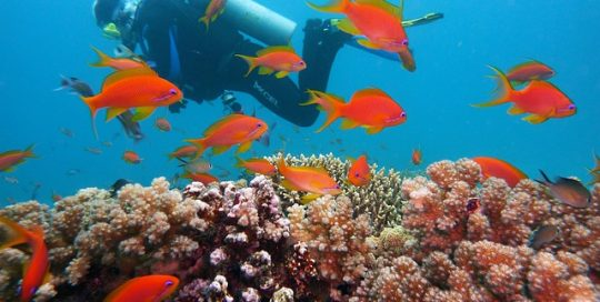 coral-reef-orange-fish-and-scuba-diving