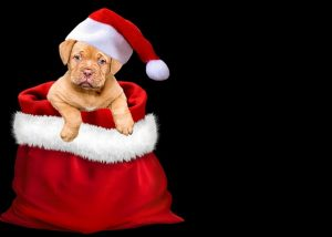 cute-puppy-sitting-in-santa-hat