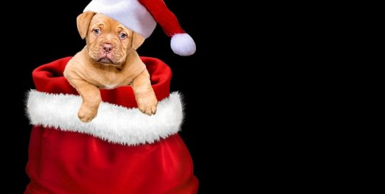 cute-puppy-sitting-in-santa-hat