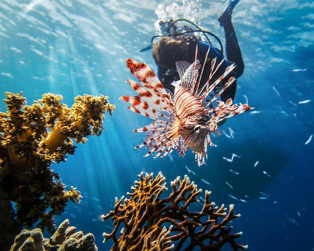scuba-diving-coral-clear-water-and-lionfish