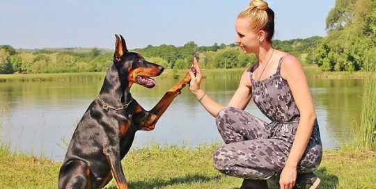 corporate-writing-woman-and-large-dog-high-five-allergy-free